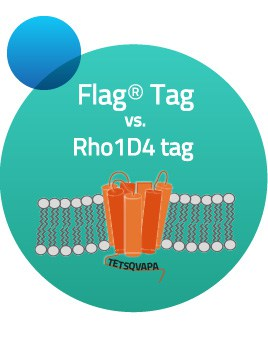 rho1d4-tag vs flag tag