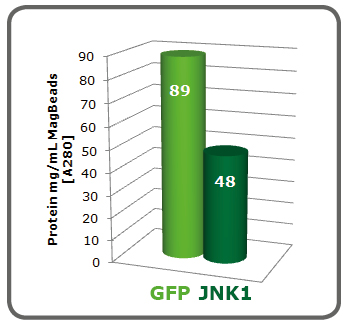 MAgBeads GFP JNK1 purification