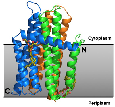 Crystallization of Protein_72
