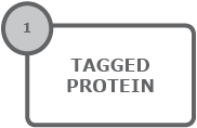 rho_tagged_protein; rho-tagged_protein