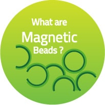 Magnetic Beads for protein purification